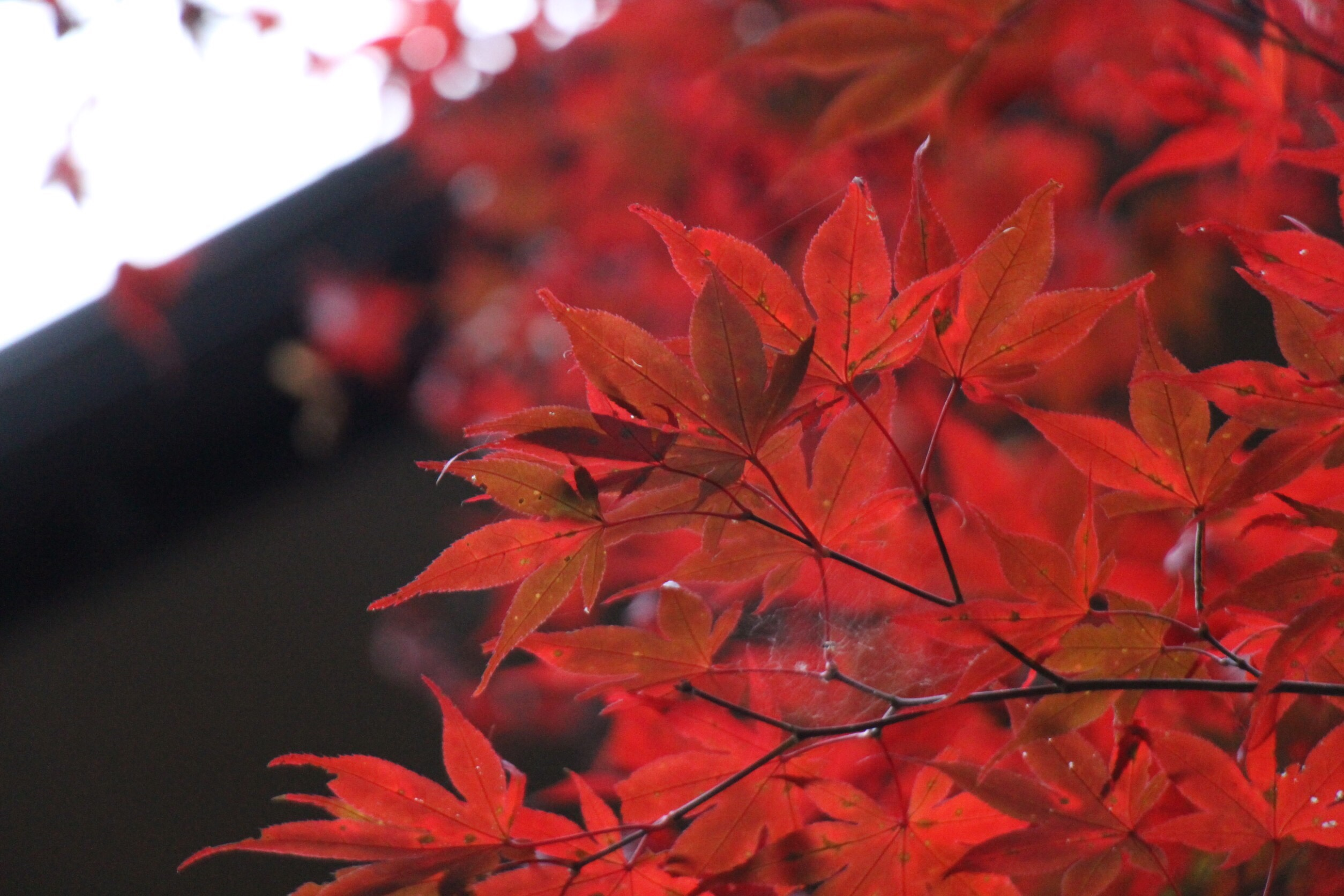 貴船神社の11月 イベント紅葉