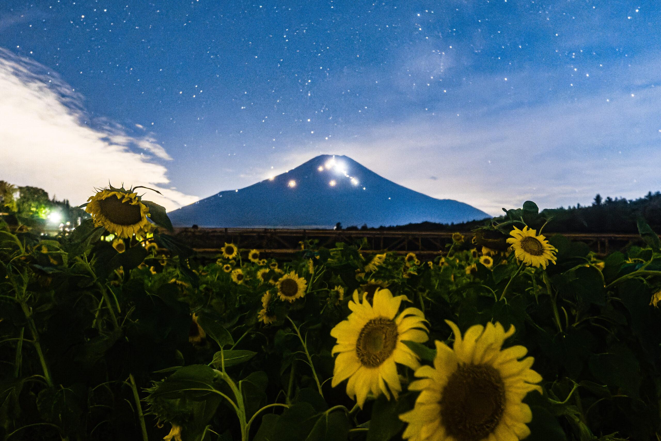8/10 富士山と向日葵とペルセウス座流星群(✍やまだ)